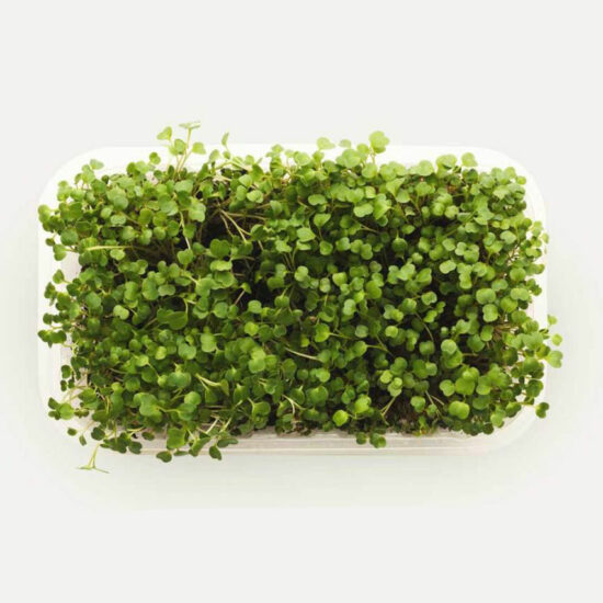 broccoli microgreens healthylife cape town